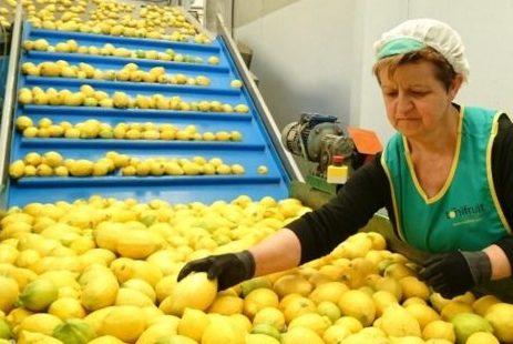 La empresa Toñifruit celebra en Fruit Attraction su Décimo Aniversario como firma referente en la producción y comercialización de cítricos en España.