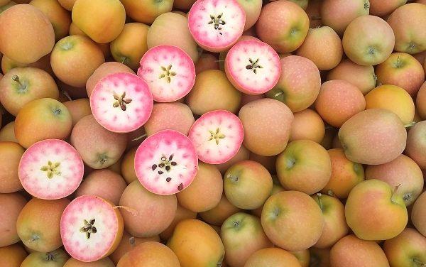 Las manzanas Kissabel vuelven a Fruit Attraction