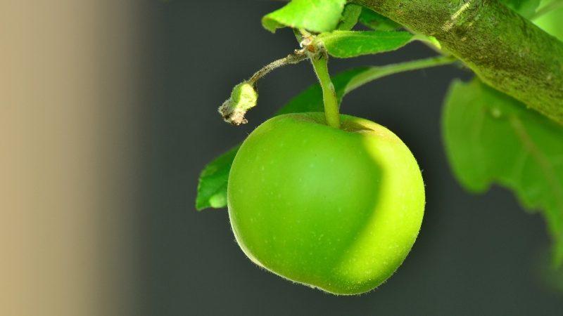 Aumenta el consumo de la manzana nacional en España