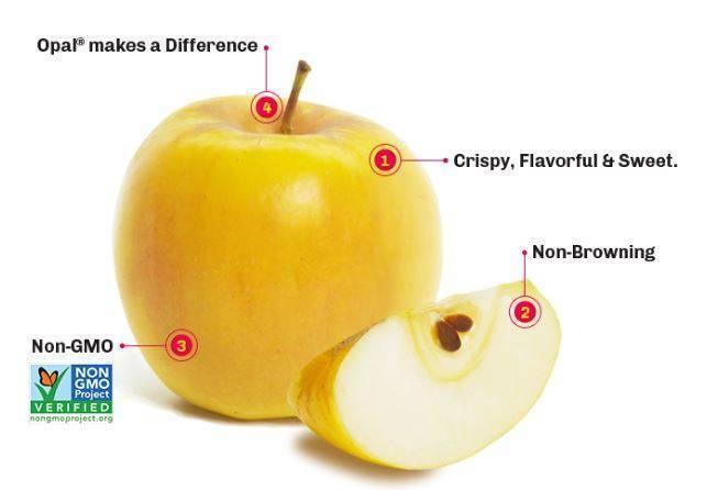 Opal® una nueva y deliciosa manzana color oro