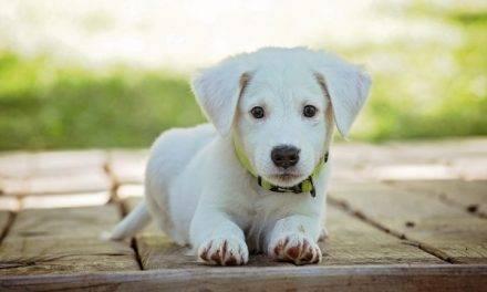 Veterinarios de Murcia fomentan la adopción de mascotas en Navidad