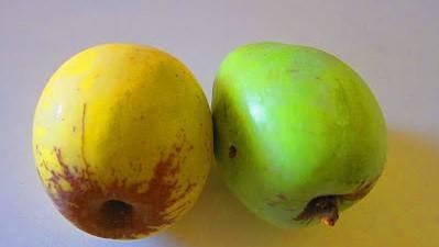 La camuesa, una sabrosa variedad de manzana tradicional