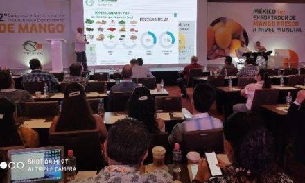 El mango de México creará una marca colectiva como estrategia de diferenciación