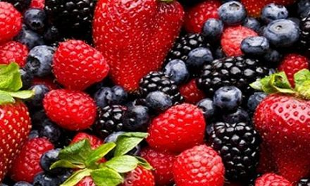 ANEBERRIES asistirá a Fruit Logistica e impulsará las berries de México