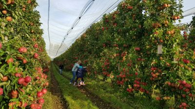Dialogue with consumers and producers is a priority for Pink Lady