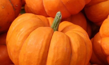 Why pumpkin is orange in color?