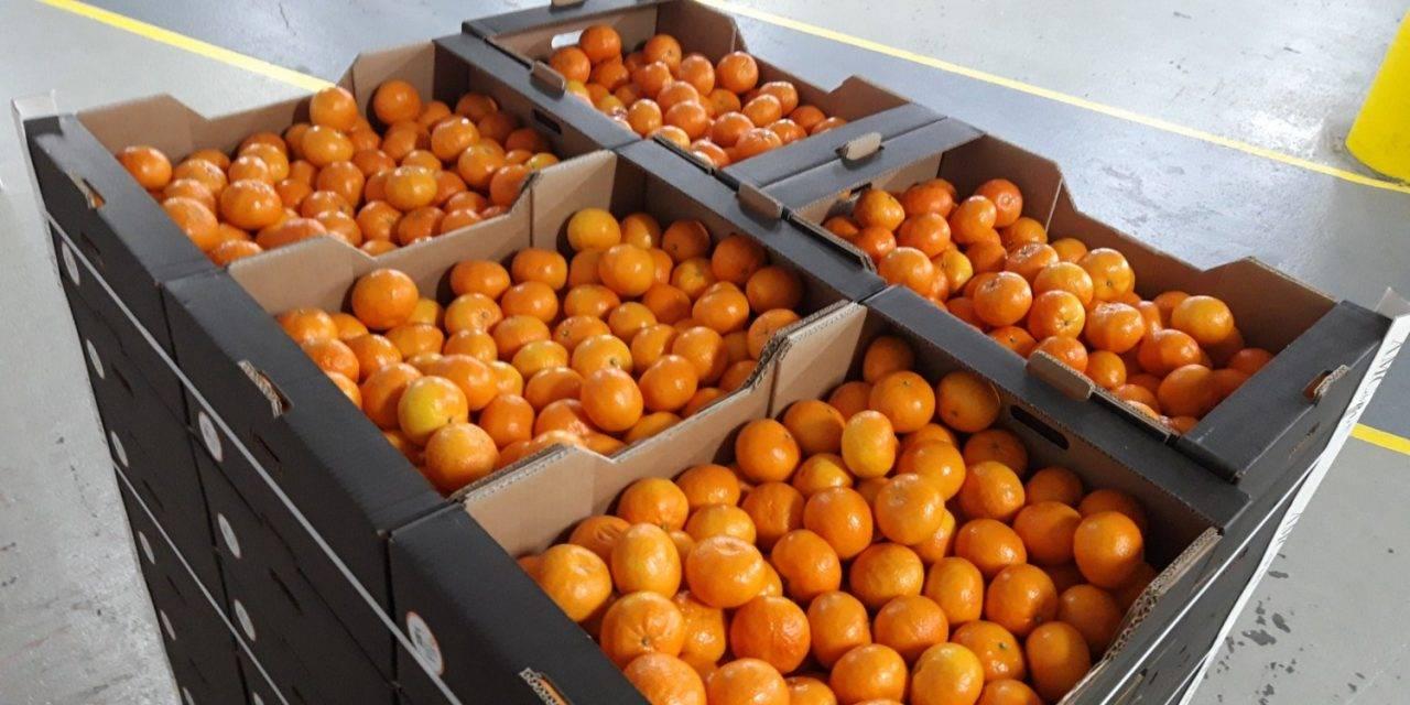 La asociación mandarina Orri dona 1.000 kilos de fruta al hospital de  IFEMA