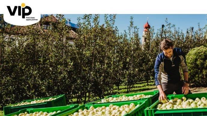 Manzanas convencionales y biológicas en Val Venosta