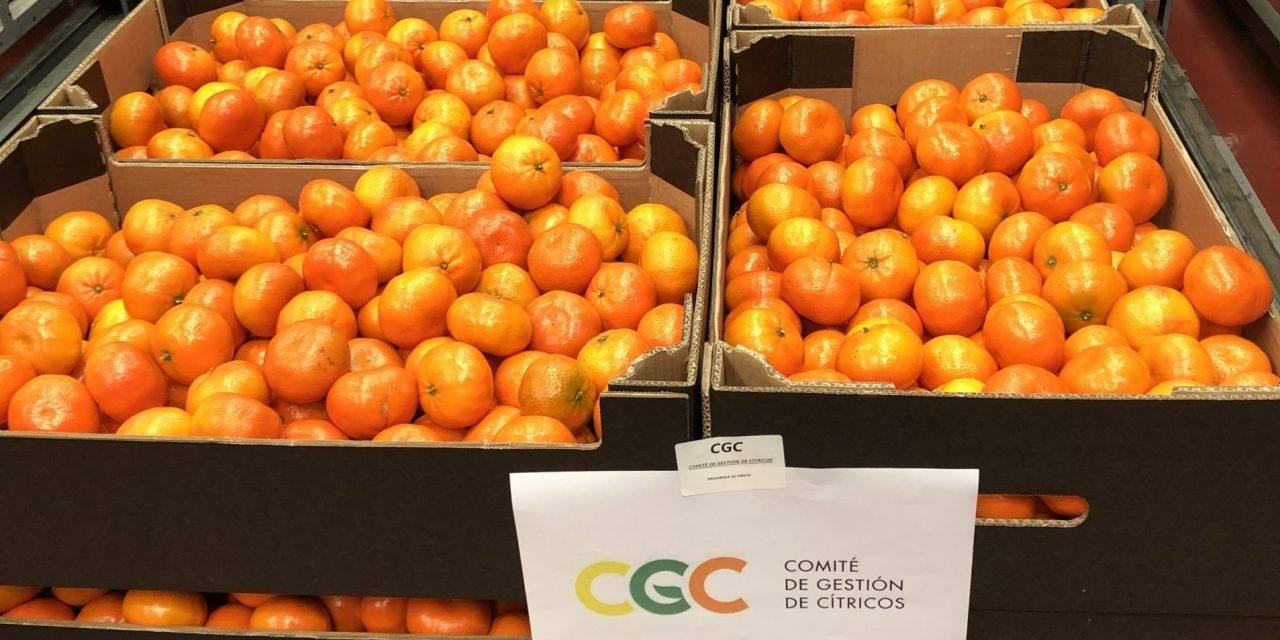 Desde el Comité de Cítricos donan mandarinas y dinero para la crisis del Covid-19