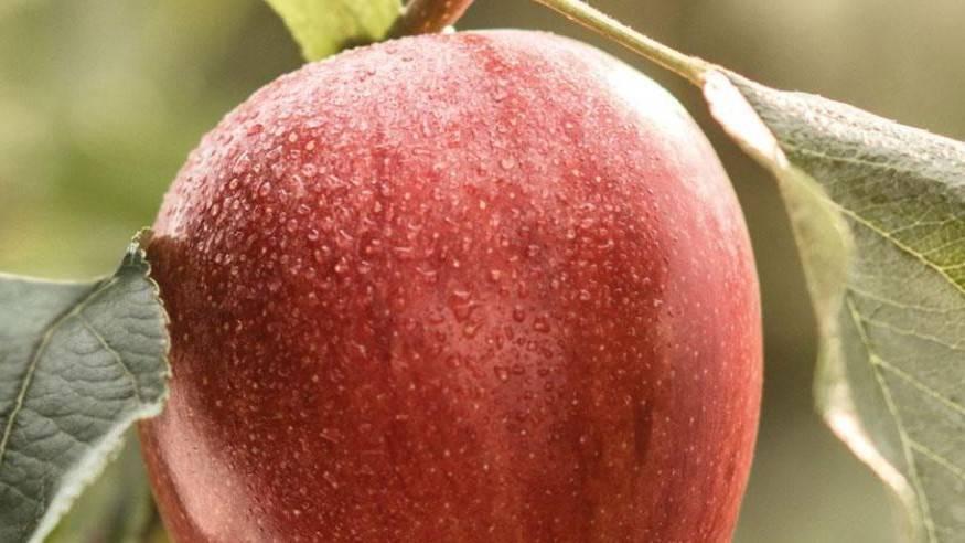 El mercado de la manzana tras el coronavirus