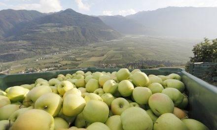 La temporada para manzanas Val Venosta en España y Portugal ha sido positiva