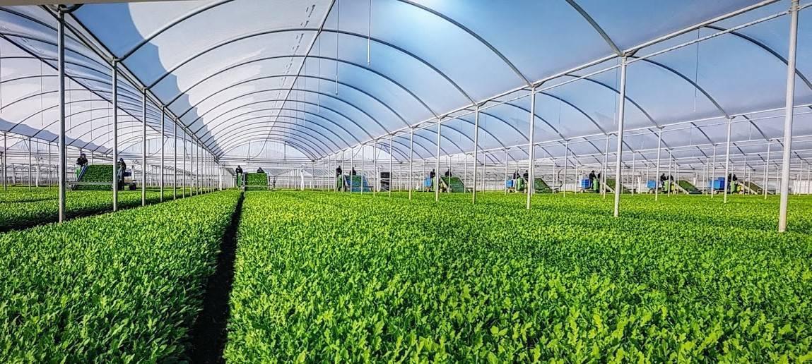 En las verduras gana popularidad el concepto local y la mecanización