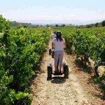 Las semillas de uva contienen taninos de interés