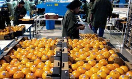 Tiempo de cuestionamientos y reflexiones para el sector citrícola argentino