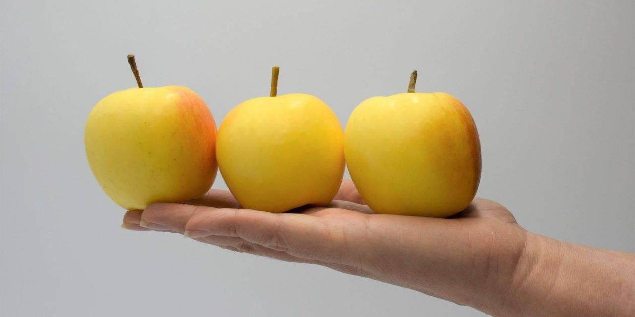 Snacking Project, destinado a desarrollar el mercado de las manzanas de calibre pequeño