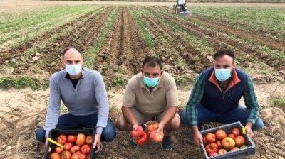 alcampo-variedades-tomates-recuperados
