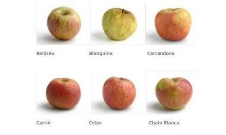 La sidra de manzana, una bebida tradicional y digestiva