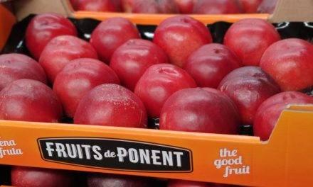 Fruits de Ponent participa en un proyecto para la clasificación del melocotón según su maduración