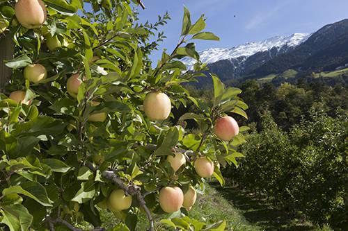 Manzanas Val Venosta inicia la campaña bajo el estandarte de un servicio de primera categoría