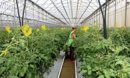 CuteSolar: cultivando el sabor de Europa en invernaderos solares