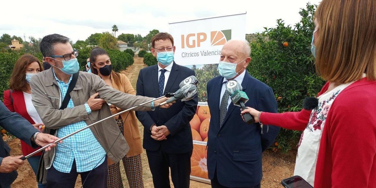 El Primer Corte de la Naranja Valenciana anima a consumir cítricos