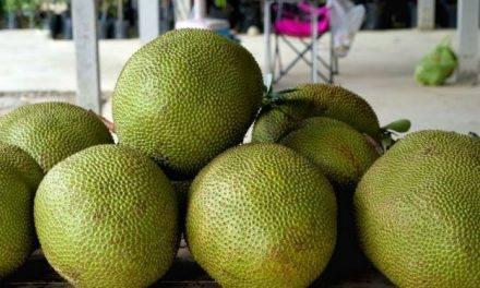 El fruto árbol del pan, ¿el próximo superalimento?