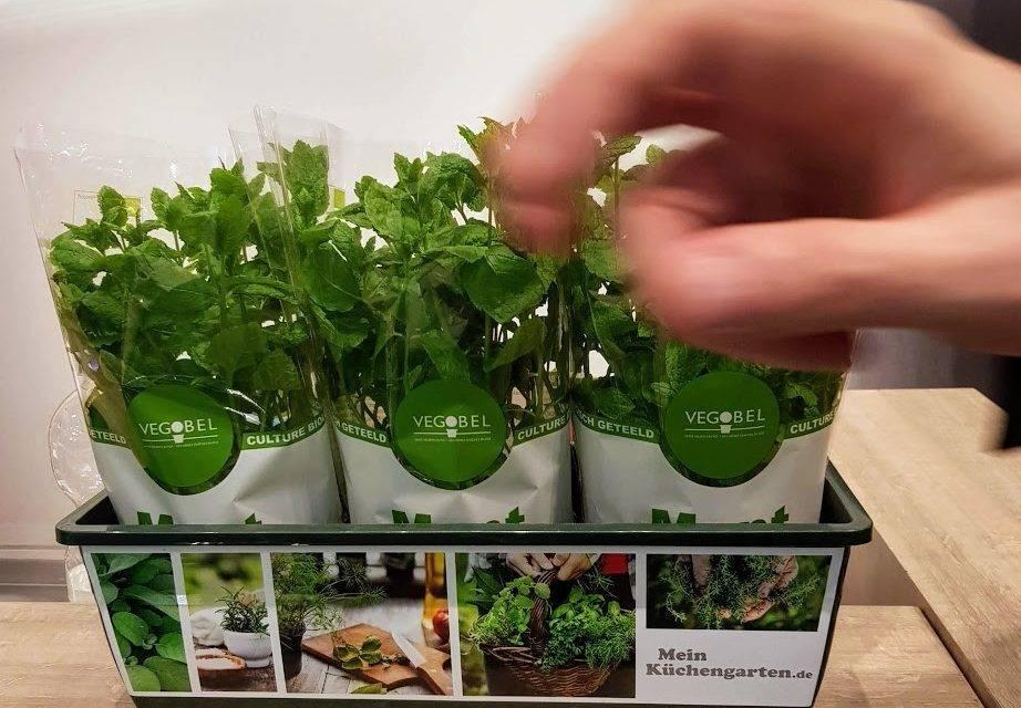 En gastronomía las baby leaf y hierbas aromáticas crecen en el interés para los nuevos cocineros