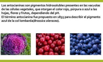 Las antocianinas, atractivos colores y poderosos antioxidantes