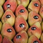 Las Ercolini de la DOP Peras de Jumilla, de cachete colorado, precoces y muy dulces