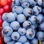 Uvas, te y cacao para una mayor agilidad mental y rendimiento cognitivo