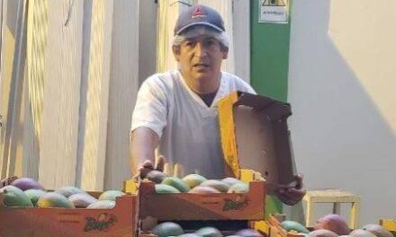 El mango de Perú apuesta por ordenar más su oferta y crear una marca de calidad