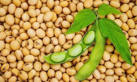 Pros y contras de la soja en nuestra dieta