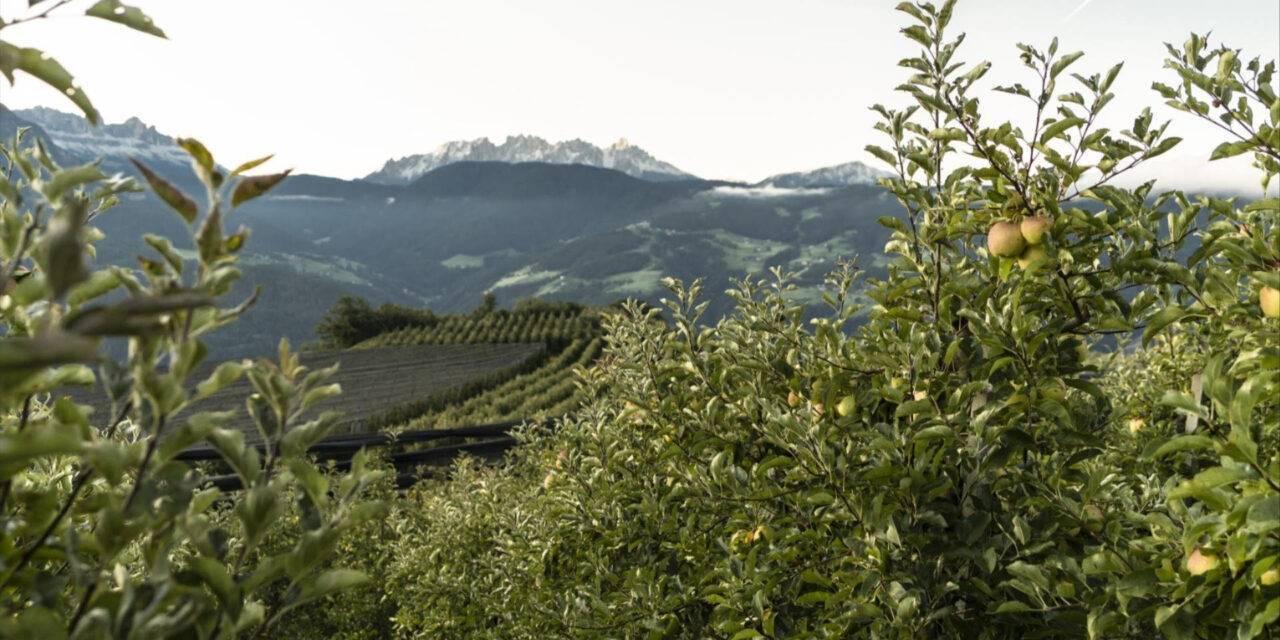VOG socio de Sustainapple, la estrategia sobre sostenibilidad del consorcio de la manzana del Alto Adige