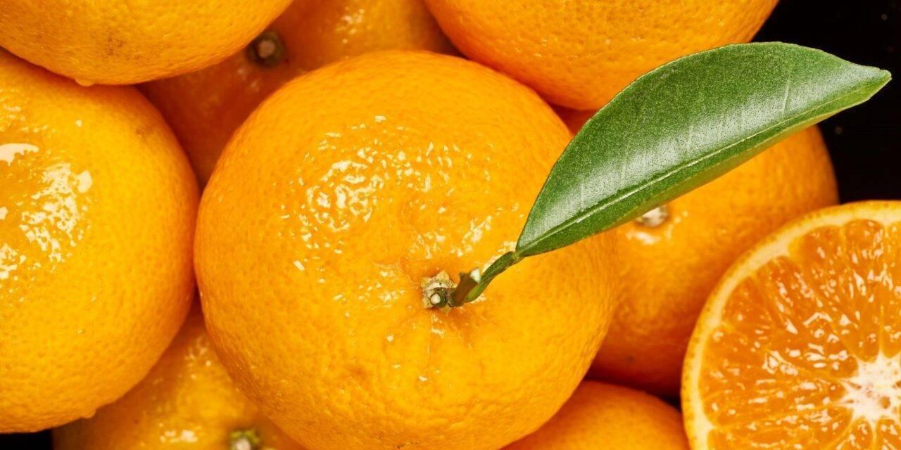 ¡A disfrutar! Orri, la mandarina premium, estará en los mercados los meses de febrero a junio