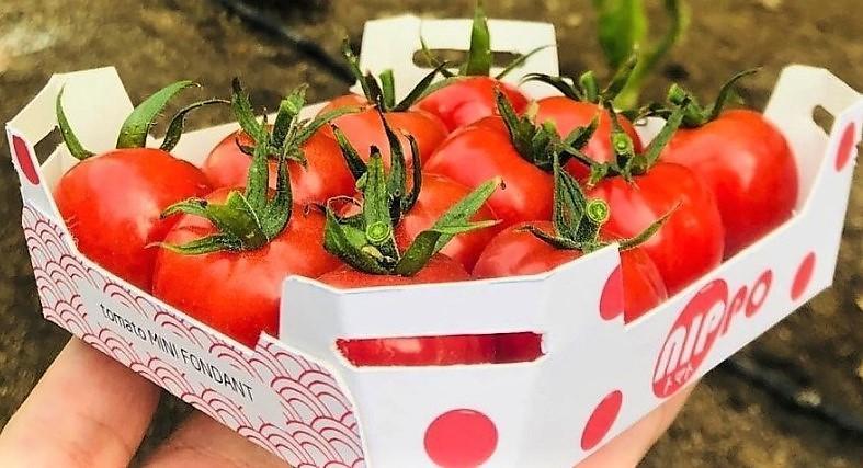 Nuevos éxitos de los tomates de semillas Fitó y el concepto Flavourite