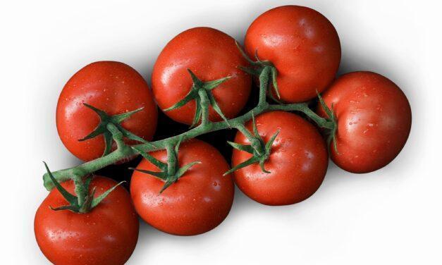 Un millón de toneladas de un solo tipo de tomates