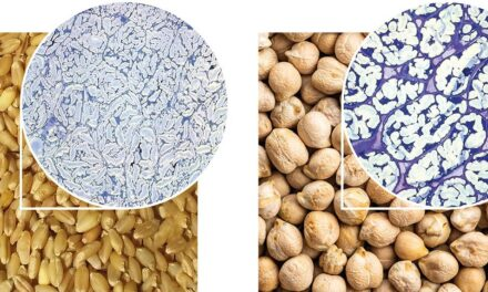 La estructura física de la fibra dietética explica sus beneficios para la salud