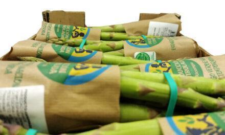 Alcampo retoma la comercialización de espárrago verde nacional y de temporada Alcampo Producción Controlada