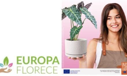 En la pandemia, si tienes estrés cuidar de las plantas y flores ayudará a tu bienestar