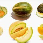Melón: fuente de vitaminas y minerales, es un alimento funcional