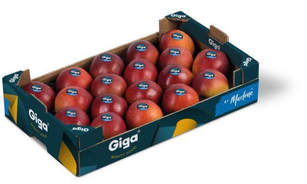 La manzana Giga, positivos los primeros tests internacionales