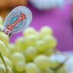 Buenas noticias de la uva embolsada de la DO Valle del Vinalopó