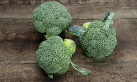 Sakata vuelve a revolucionar el cultivo del brócoli con la veriedad Ulysses