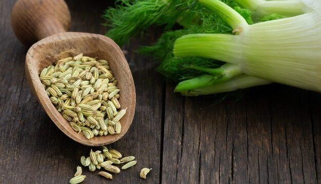El hinojo, una hierba muy aromática comestible, nutritiva y beneficiosa a la salud
