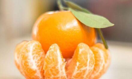 Las mandarinas australes conquistan al mundo gracias a un recambio varietal