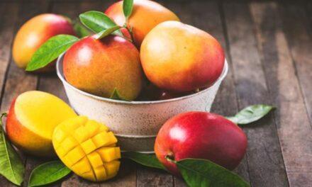 El Mango de América del Sur; calidad y sabor