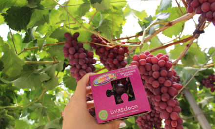 Uvasdoce tiene novedades en Fruit Attraction 2021