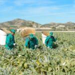La Alcachofa una nueva campaña con optimismo