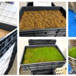 Cultivo hidropónico para tener lechugas y otras hortalizas y frutas de casa
